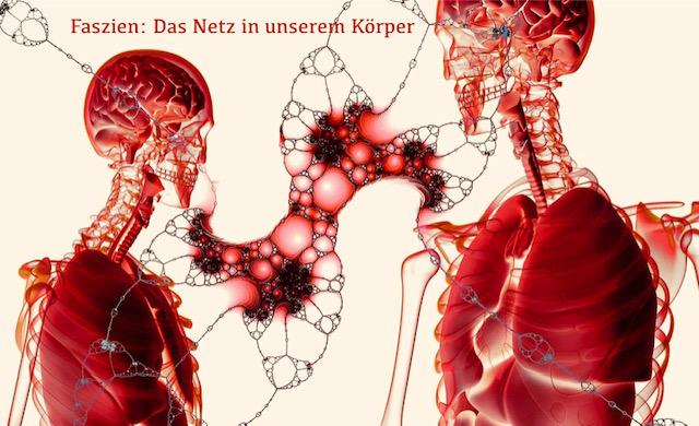 das Netz in unserem Körper